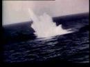 Дельфин ВЕСНА 945 Dolphin Spring