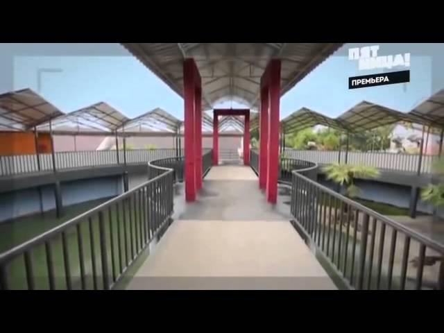 Орёл и Решка Шопинг Бангкок Тайланд 1 Сезон 41