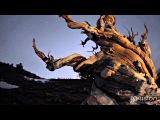 Les Baxter - Taboo (JoJo Effect Remix) Sgrima YDedal
