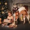 Миниатюрные лошадки на праздник.Продажа