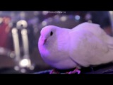 Бутырка - Сорвутся голуби