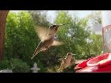 #colibri #колибри #птица #птичка #полёт #музыка #relax #Knxwledge #SgndOff #интересное #coub