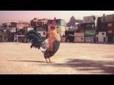 Петушиный танец