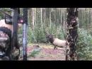 Cameron Hanes Colorado Elk 2013 - Ty Cary