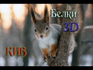 3D Лесные Белки в парке Кусково  Москва