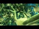 Как устроен мозг и где находятся мысли. Constr of brain, thoughts