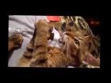 Смешная подборка с кошками, псами и белками 2013 года