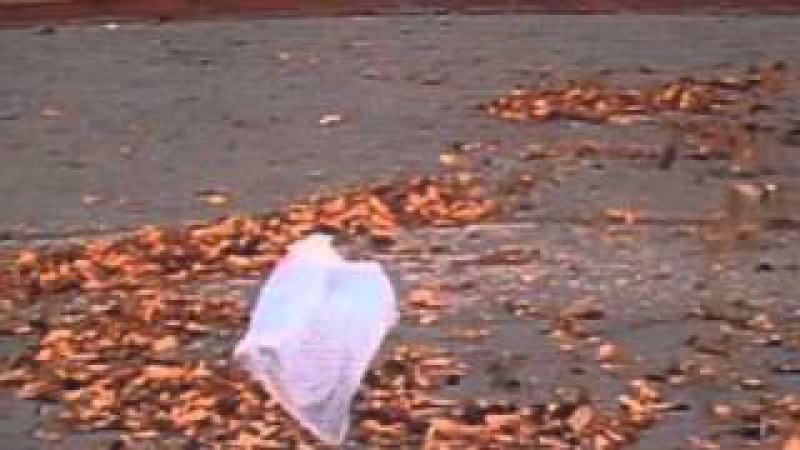 'American Beauty' - Thomas Newman (from the 'plastic bag scene')