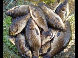 секреты рыбалки давняя снасть ловля на кольцо РСН _  long fishing tackle fishing on the ring