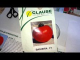 Антифейк. Часть 34. Семена томата Багира F1 от французской компании Clause
