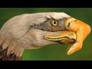 The Eagles DESPERADO HD