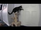 Кот открывает дверь собаке