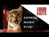 10 Amazing Animal Mosh Pits
