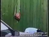 KIWI SKINHEAD SMASHES HEAD THROUGH FENCE