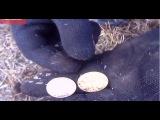 Поиск старинных монет с друзьями! Search for gold coins and treasure