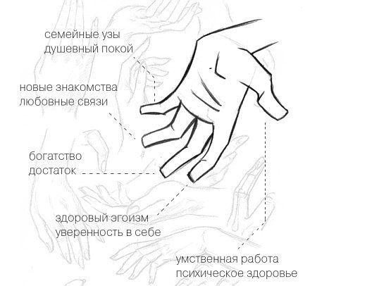 Маникюр по фен-шую: ВЫБОР ПАЛЬЦА Также нужно выбрать ногти, которые вы хотите выделить. БОЛЬШОЙ палец отвечает за умственную работу. Выделение этого пальца положительно воздействует на психическое здоровье. УКАЗАТЕЛЬНЫЙ палец указывает на проявление здорового эгоизма. Выделяя его другим цветом, можно укрепить уверенность в себе. СРЕДНИЙ палец выделяют для привлечения богатства и уверенности в завтрашнем дне. БЕЗЫМЯННЫЙ палец отвечает за любовные связи. Покрасив его в другой цвет, можно…