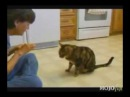 Подборка умных котов
