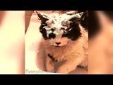 Funny Cat Vines - Fails Compilation 2015