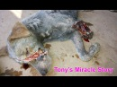 Animal aid unlimited. Dog rescued almost dead - watch what happened!