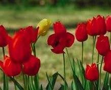 Қазақша Құттықтау - тілек: 8 Наурыз - Халықаралық әйелдер күні (Қыздар)