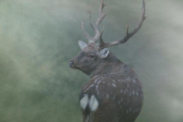 Фото дня. В утреннем тумане.