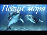 1 Hr - Пение Дельфинов и Звуки Океана  Dolphins and Ocean Sounds