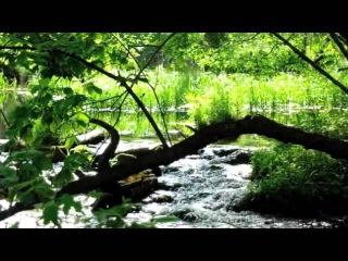 Релаксация. Звуки Природы. Река. Вода. Пение Птиц