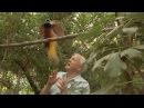 Bird interrupts David Attenborough - Attenborough's Paradise Birds - BBC Two