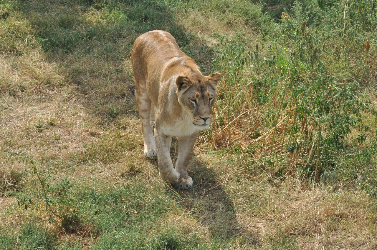 Парк львов Тайган