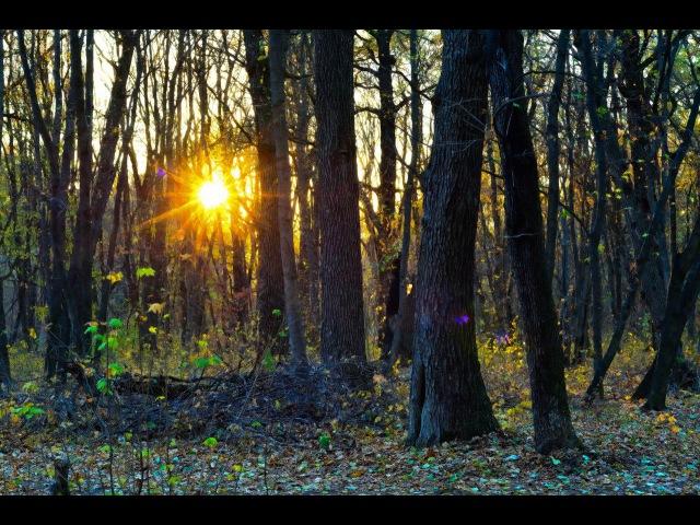 Харьковский лесопарк осенью