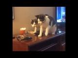Два кота - два дурака и вертолетик