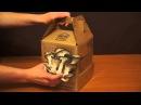 Грибная коробка. Наборы для выращивания грибов в домашних условиях.