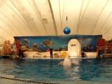 Прыжок былого кита