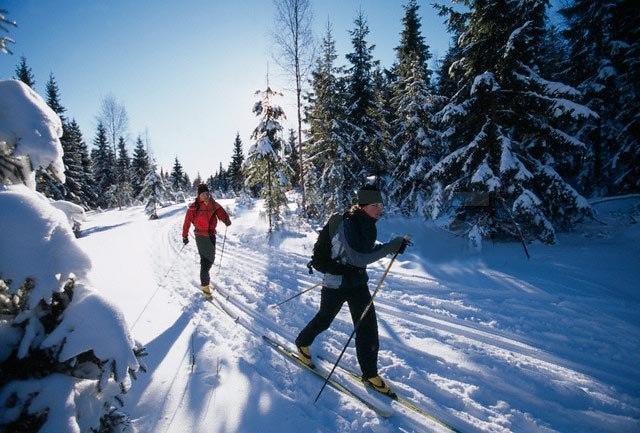 Афиша Коломна Лыжный ПВД 15 февраля