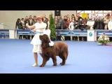 Фристайл-танец с собакой