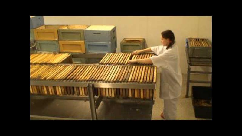Финская медогонка (Paradise Honey)