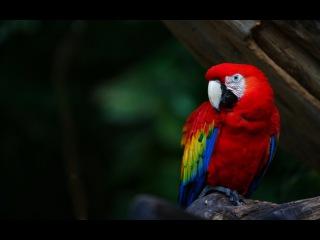 Разнообразие попугаев Австралии (Документальный фильм о родине попугаев - Австралии)
