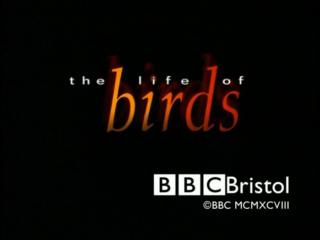 BBC: Жизнь птиц: Пределы выносливости / 10 серия