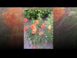 Видеофильм Волшебный мир цветов! Цветочная долина!