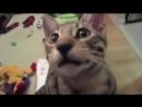 Кот хахатун Попробуйте не рассмеяться