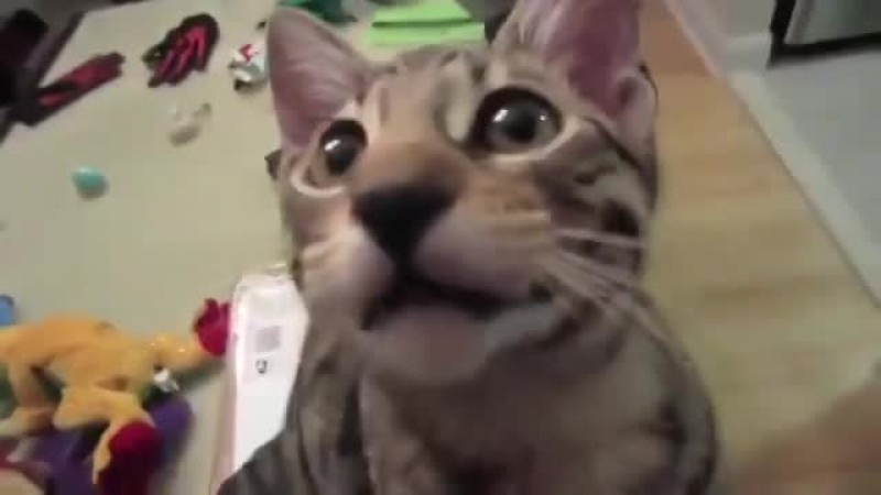 Кот хахатун Попробуйте не рассмеяться  » онлайн видео ролик на XXL Порно онлайн