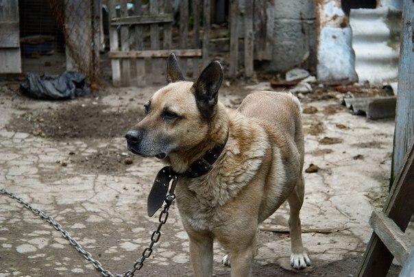 Собака, Индустар-50-2, Животные