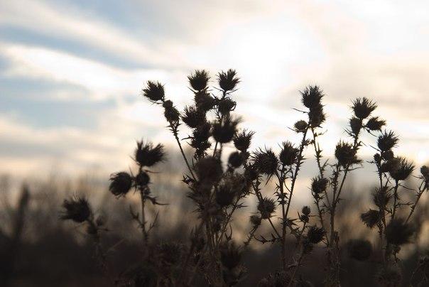 небо, растения, колючки
