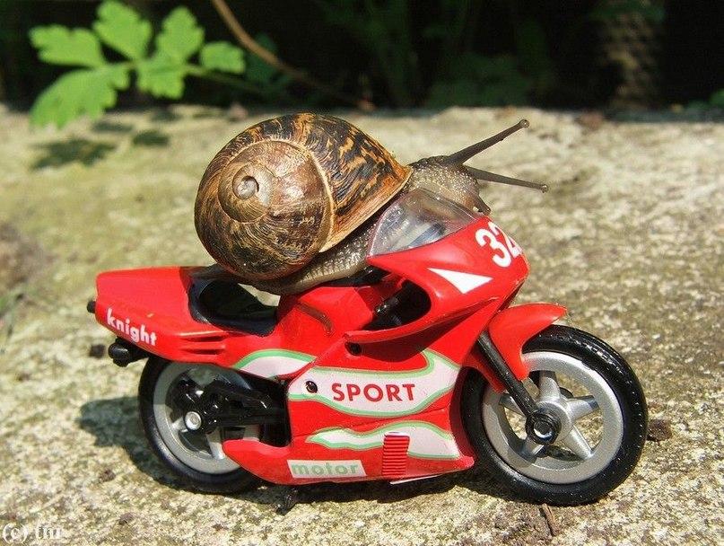 Картинки, картинки мотоциклов прикольные