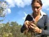Калган применение, лечебные свойства калгана на www.травами-лечение.рф
