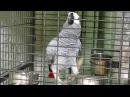 ВАУ! Попугай читает стихи лучше первоклашки