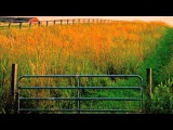 Grazing in the Grass by Hugh Masekela  Video by Chris Burke