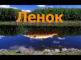 Русская Рыбалка 3.99.Карма №2.Ленок.