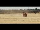"""Фильм """" Тропы  Tracks."""" (2013)(Австралия)"""