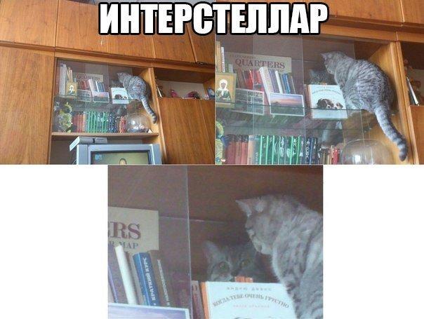 http://cs622417.vk.me/v622417070/3dcbe/xiMOhxiREVE.jpg